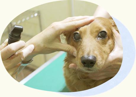 東京都あきる野市 ソレイユ動物病院|眼科診療